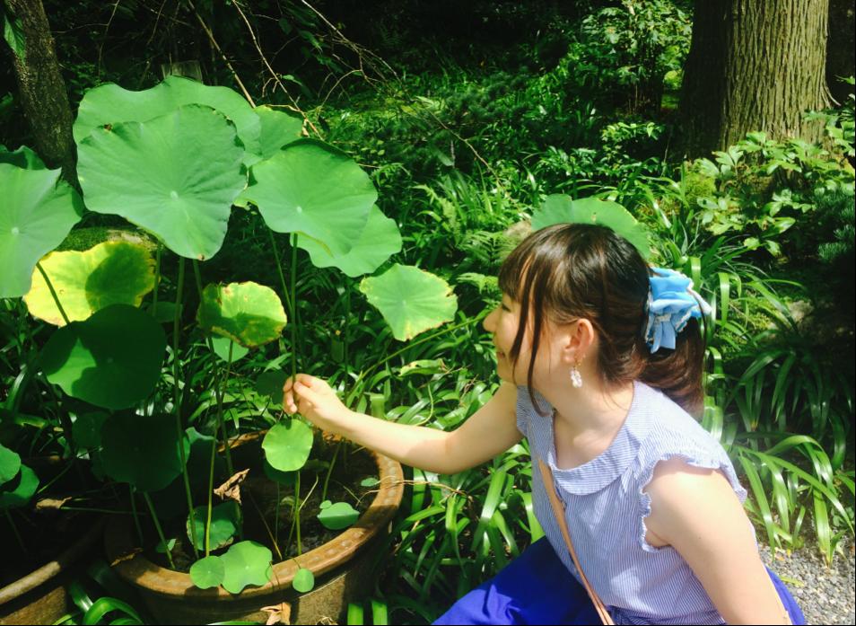 京都の植物と