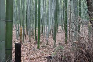 京都嵐山女子旅で人力車をおすすめする5つの理由