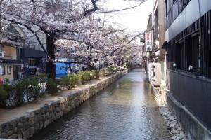 京都で花見!学生が撮った桜の穴場スポット2017