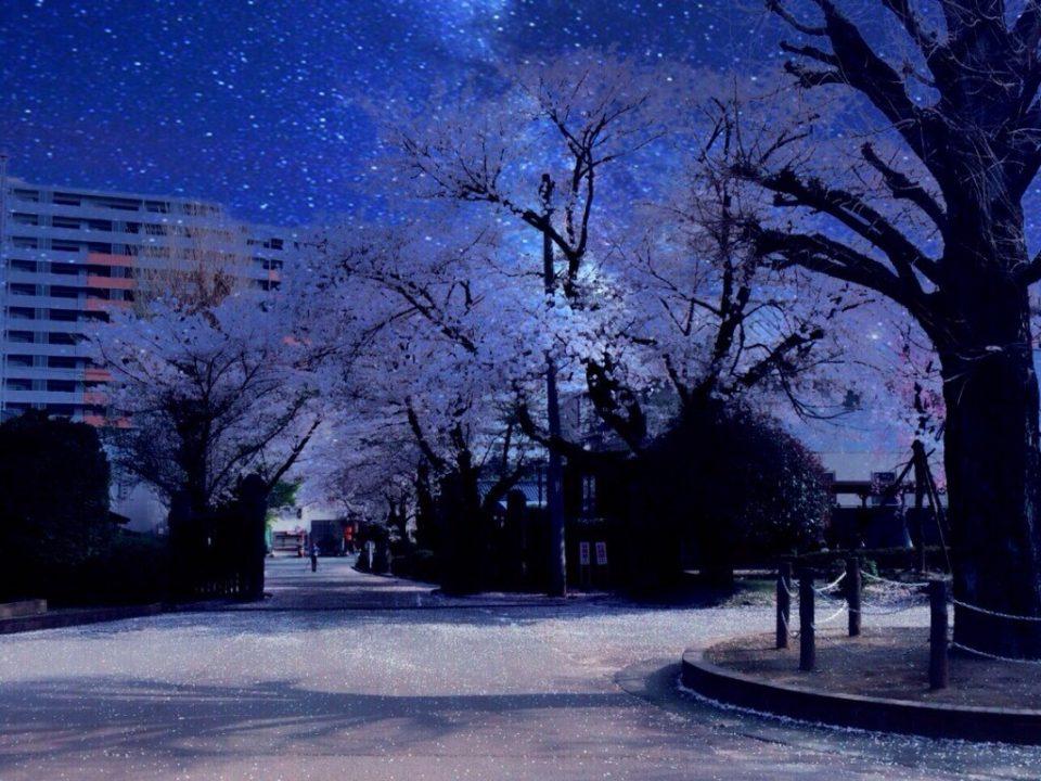 公園と夜桜