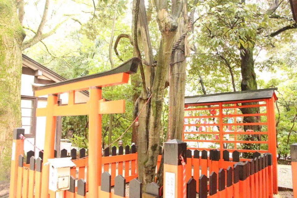 下鴨神社の連理の賢木
