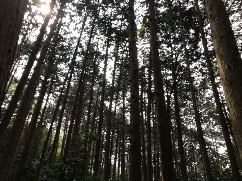 「京都」は国宝の玉手箱!! 京都という歴史のある町を知りたい!