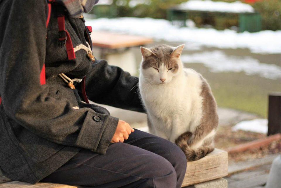 立命館大学の可愛い猫