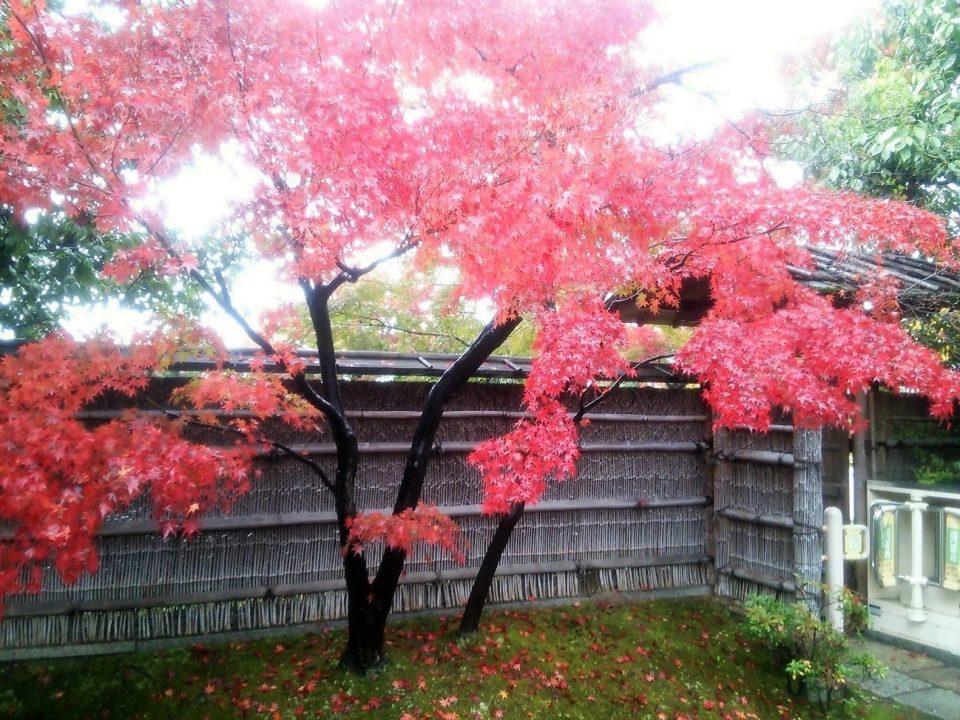 梅小路公園の紅葉