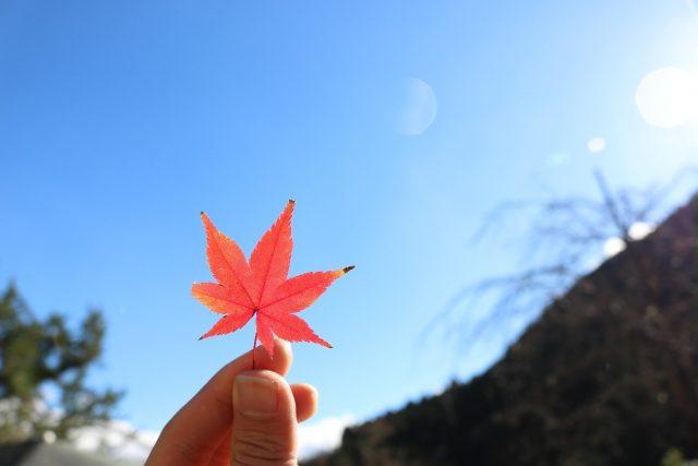 定番から穴場まで!京都通の学生たちがオススメする紅葉スポット7選!
