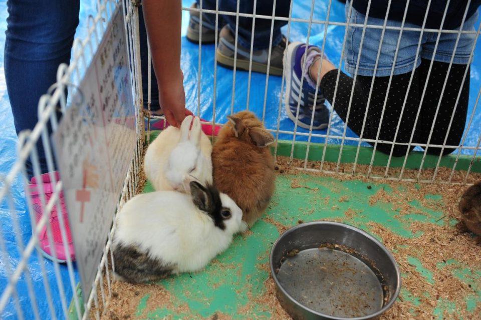 同志社大学クローバー祭の移動動物園