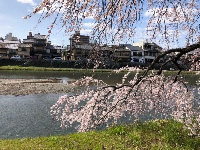 京都で学ぶ伝統建築の魅力