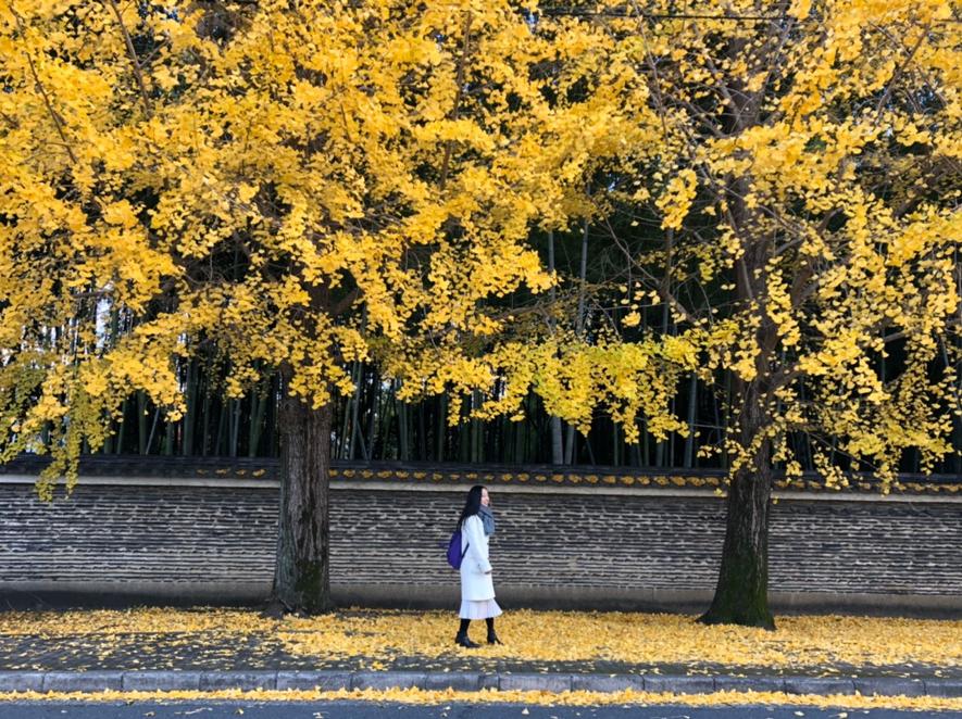 国内留学生の私が京都に学んだ3つの大切なこと。